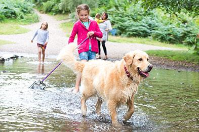 Family paddling in a stream with the dog at Seven Springs on Cannock Chase.