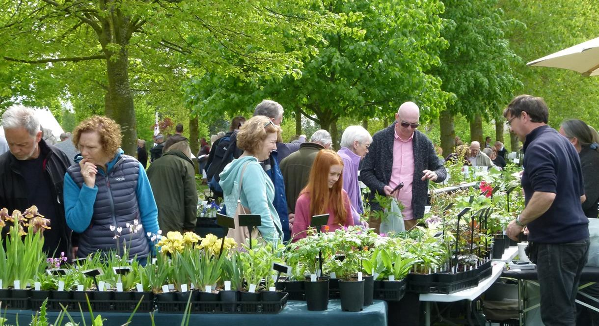 Early Summer Plant Hunters' Fair at the National Memorial Arboretum