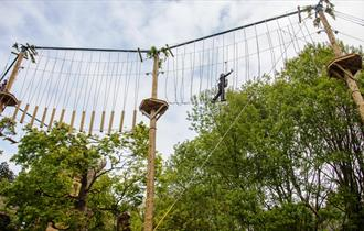 Alton Towers Tree Top Quest