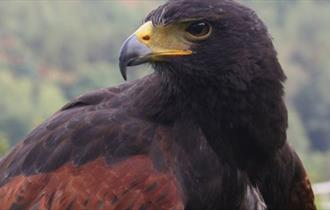 Visit the Eagles at Kingsley Bird Centre