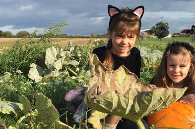Pick your own pumpkins at Lower Drayton Farm during October half term