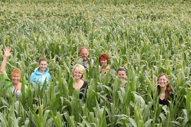 Maize Maze Corn field