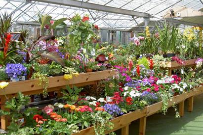 Plants for sale at Lealans Garden Centre