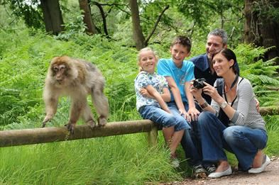 Breakfast with the Monkeys at Monkey Forest