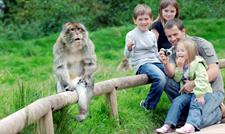 Woodland Trust Weekend at Trentham Monkey Forest