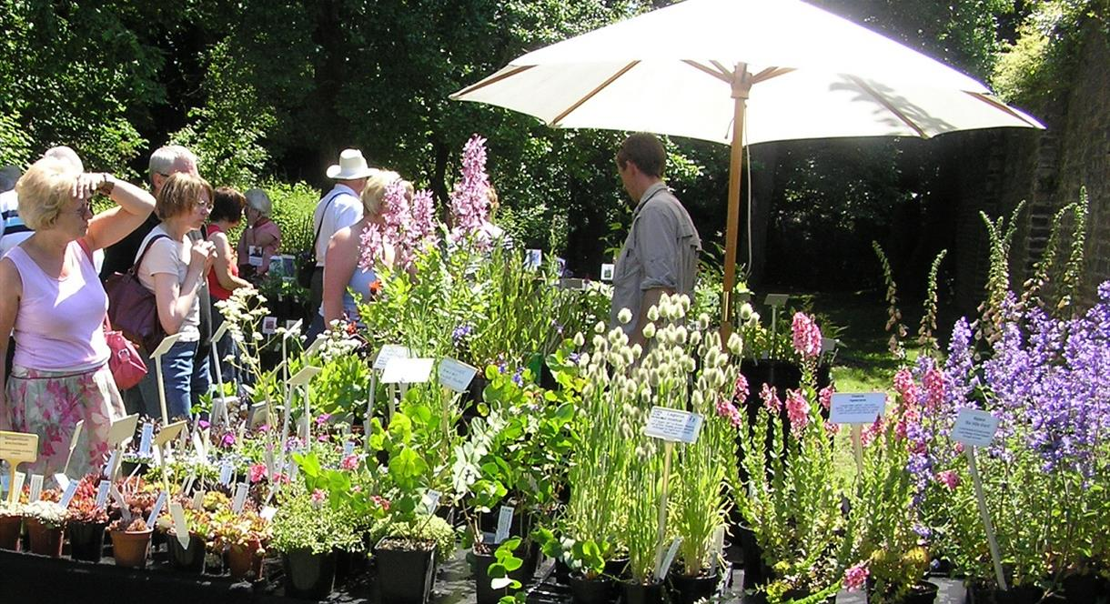 Summer Plant Hunters' Fair at Sugnall Walled Garden