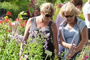 Summer Plant Fair at The National Memorial Arboretum