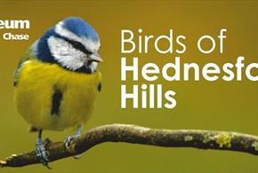 Birds of Hednesford Hills